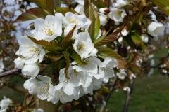 Nürnberger Land Blüten